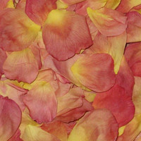 Sunrise Preserved Freeze Dried Rose Petals
