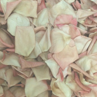 VINTAGE Preserved Freeze Dried Petals