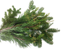 Mixed Christmas Evergreens. 20lbs Boughs