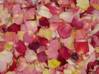 Assorted colors of rose petals