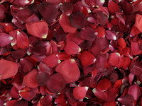 Marsala blend of rose petals.  Colors may vary from your monitor!
