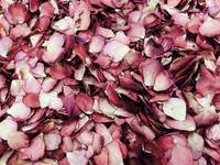 Rouge Rose Petals- 120 cups Freeze dried petals. Overstock sale Flyboy Naturals Rose Petals