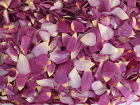 Love Affair eco-friendly, freeze dried rose petals from Flyboy Naturals