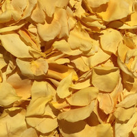 Ch-Ching Golden Yellow Eco-friendly, freeze dried rose petals by Flyboy Naturals.