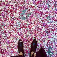 Petal Drop LA | Flyboy Naturals Rose Petals