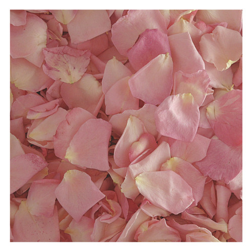 Rose petals wedding petals eco friendly freeze dried petals bridal pink rose petals 30 cups preserved freeze dried rose petals wedding petals mightylinksfo