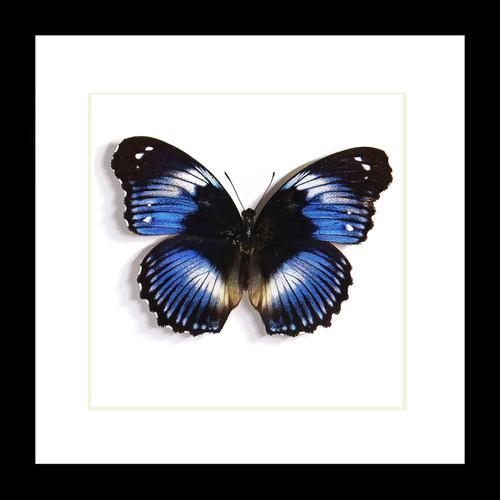 butterfly framed Bits & Bugs