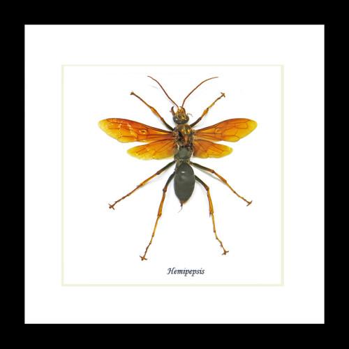Wasp framed Bits & Bugs