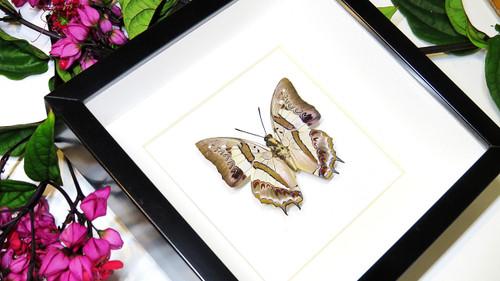 Framed butterfly  Bits&Bugs