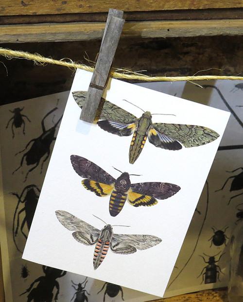 Bug Card 7