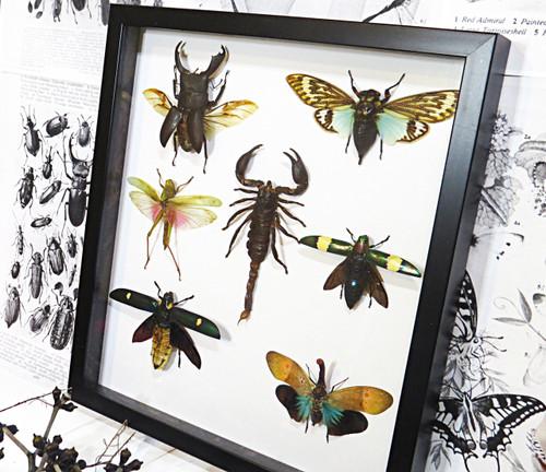 Bugs spiders cicada grasshopper lucanid beetle jewel beetle lantenfly