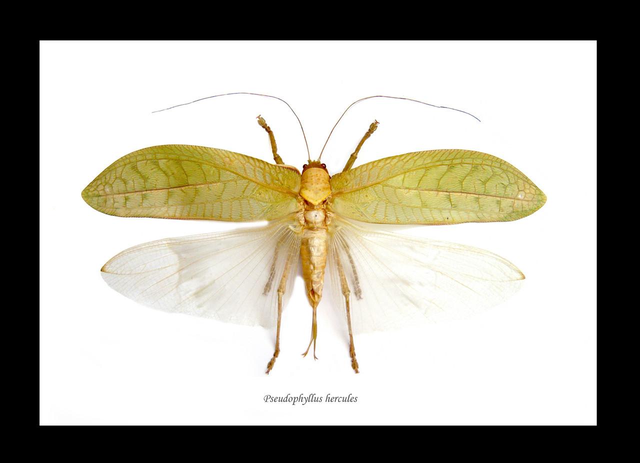 bugs bits #10