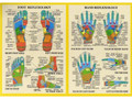 Hand and Foot Reflexology - with Daniel                     (mobile users, click product description to schedule)