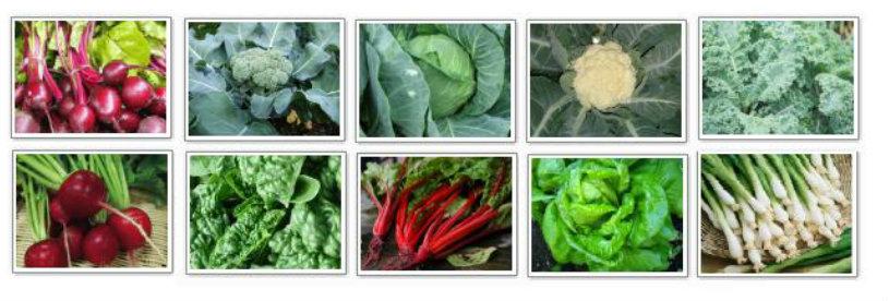 fall-varieties.jpg
