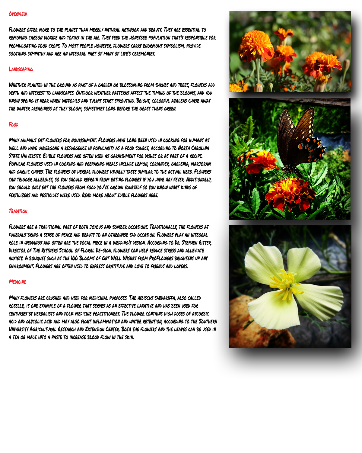 flower-page-small.png