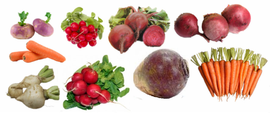 root-crop-banner.png