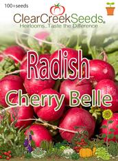 Radish - Cherry Belle (100+ seeds)