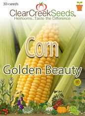 Corn – (Sweet) Golden Beauty (30+ seeds)