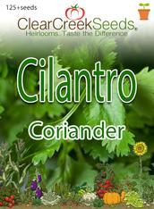 Cilantro - Coriander  (65+ seeds)