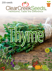 Thyme (250+ seeds)