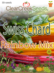 Swiss Chard - Rainbow (50+ seeds)