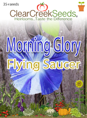 "Morning Glory ""Flying Saucer""  (35+ seeds)"