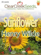 "Sunflower ""Henry Wilde"" (30+ seeds)"