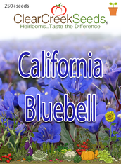 California Bluebell (250+ seeds)