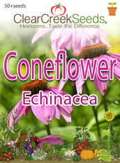 "Coneflower ""Echinacea"" (50+ seeds)"
