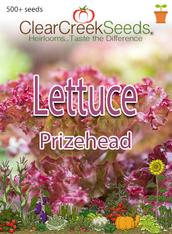 Lettuce Leaf - Prizehead (500+ seeds) JUMBO PACK