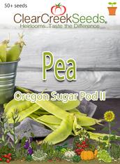 Pea Snow - Oregon Sugar Pod II (50+ seeds) JUMBO PACK
