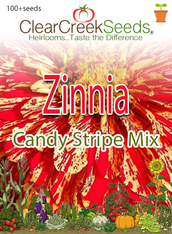 "Zinnia - ""Candy Stripe Mixed"" (100+ seeds)"