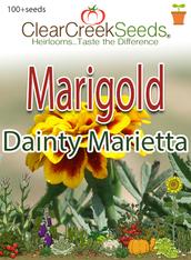 "French Marigold (Dwarf) - ""Dainty Marietta"" (100+ seeds)"
