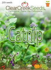 Catnip (250+ seeds)