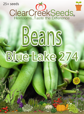 Bean (Bush) - Blue Lake 274 (25+ seeds)