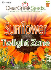 Sunflower (Dwarf) Twilight Zone (30+seeds)