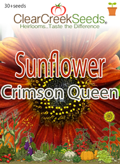 "Sunflower ""Crimson Queen"" (30+seeds)"