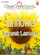 Sunflower Sunset Lemon (30+seeds)