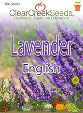 Lavender- English (100+ seeds)