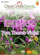 Impatiens - Tom Thumb Violet (40+ seeds)