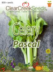 Celery Seeds - Pascal (800+ seeds) JUMBO PACK