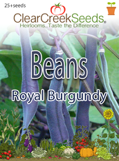 Bean - (Bush) - Royal Burgundy (25+ seeds)