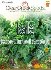 Kale - Blue Curled Scotch (250+ seeds)