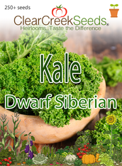 Kale - Dwarf Siberian (250+ seeds)