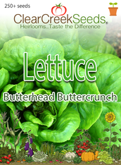 Lettuce Butterhead - Buttercrunch (250+ seeds)