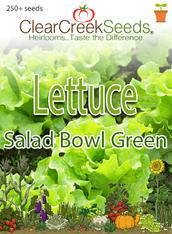Lettuce Leaf - Salad Bowl Green (250+ seeds)