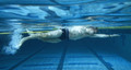 Lane Gainer Competitive Swim Belt : 30 ft. model - Resisted Swim pictured. Water-snake $50