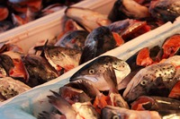 10 Hidden Health Benefits of Fish Broth