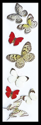 Nine50 Assorted black and white and red butterfly
