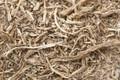 Punarnava Root